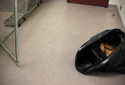 Poor Dead Dog in Bag