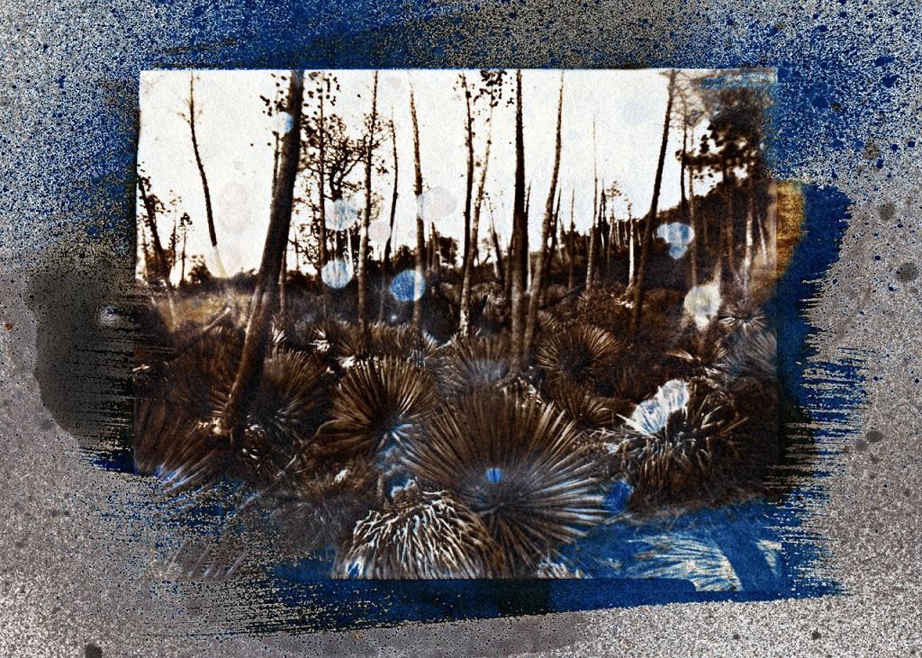 Yucca on Hillside