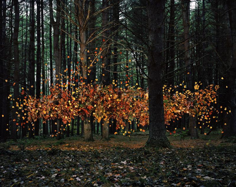 jackson_leaves