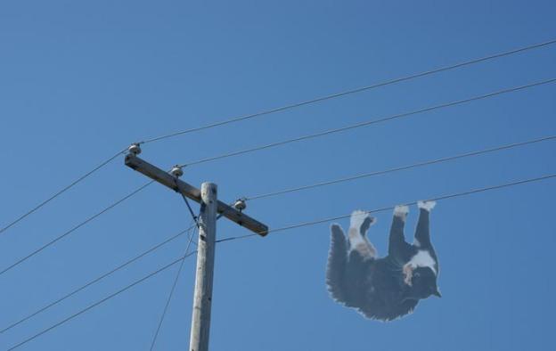 telephone pole ghost cat